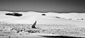 Dunescape 1 (Infra-red)  2013