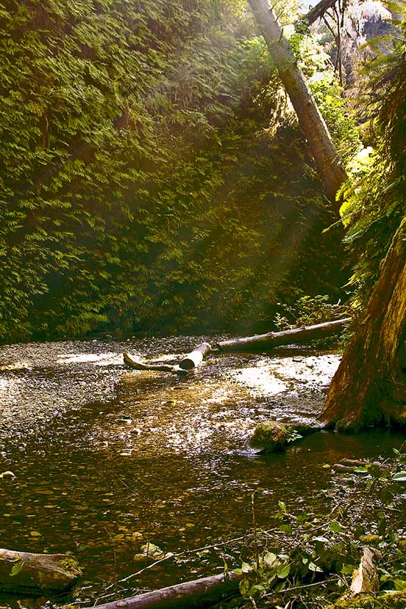Autumn Sun in Fern Canyon #1   2011